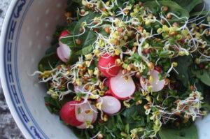 Spinatsalat mit Radieschen-Sprossen